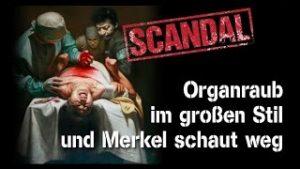 Skandal! Organraub im großen Stil und Merkel schaut weg