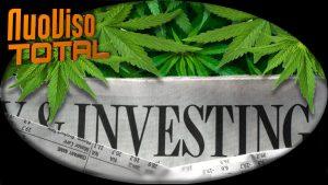 Green Rush – Wirtschaftswunder durch Cannabislegalisierung