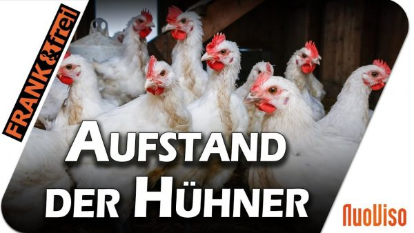Aufstand der Hühner – Frank&frei