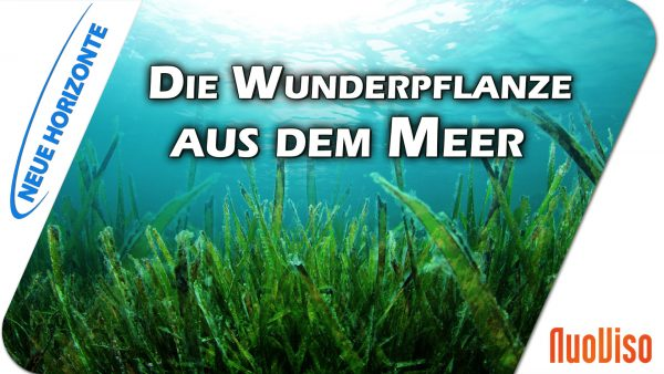 Algen – Gesundheit aus dem Meer – Dr. Heidi Wichmann