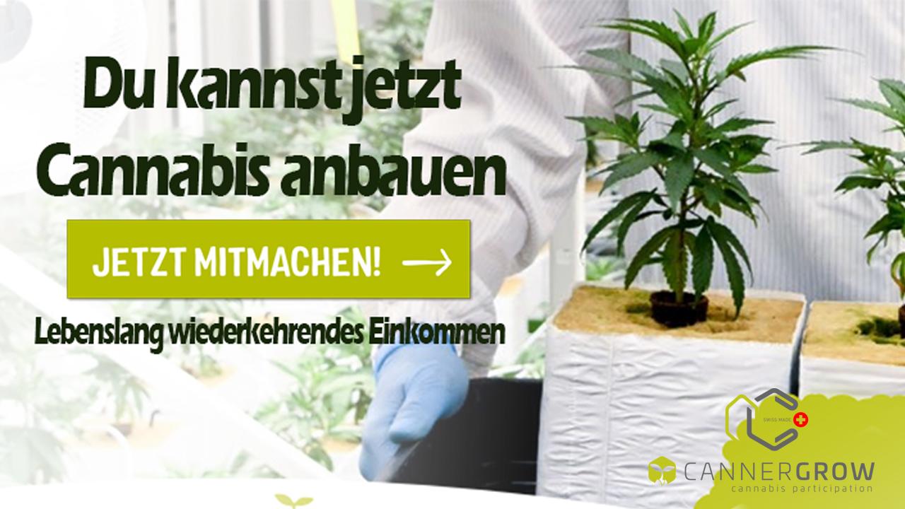 Du kannst jetzt Cannabis anbauen